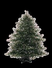 Christmas Pine Tree 4