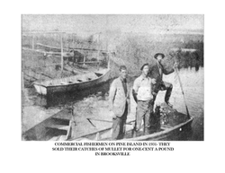 Historic Aripeka_Page_53.png