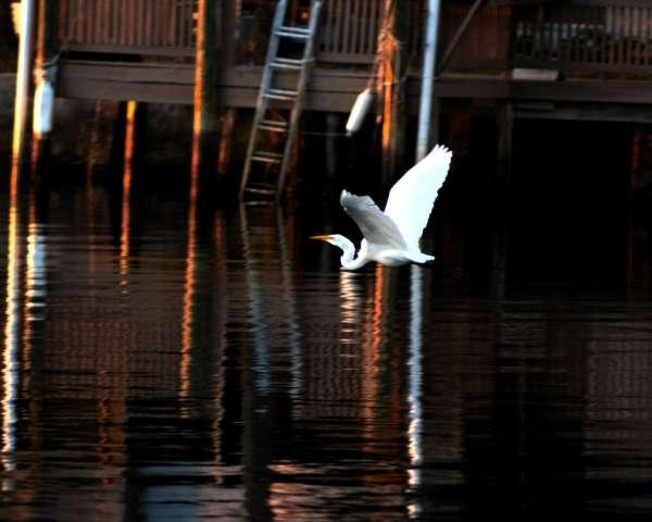 waterscape bird_008.JPG