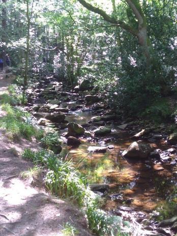 287 Littlebeck Wood.jpg