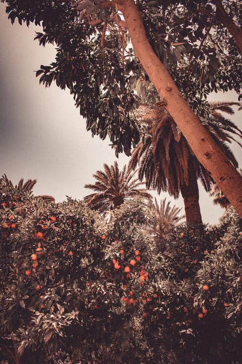 Maroko-143.jpg