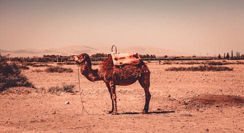 Maroko-59.jpg