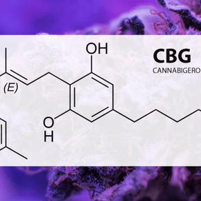 Everything You Need To Know About CBG and CBG Flower