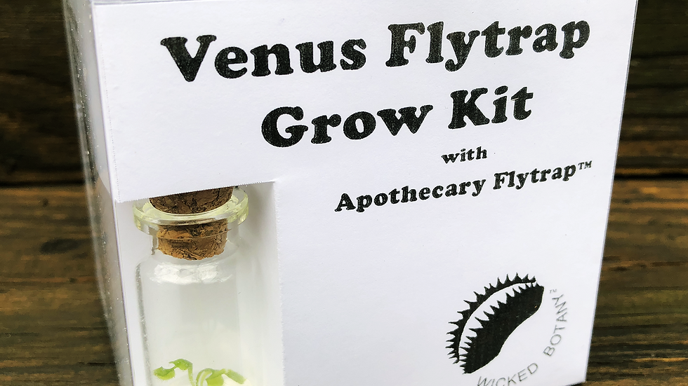 Apothecary Venus Flytrap Grow Kit