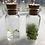 Thumbnail: Apothecary Venus Flytrap Grow Kit