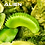 Thumbnail: Alien Venus Flytrap
