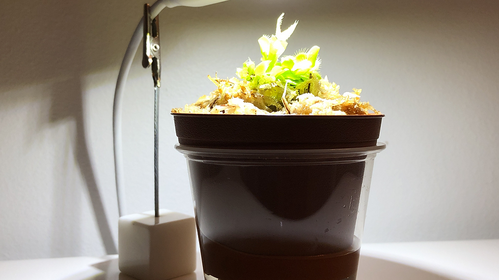 Indoor Light Kit for Small Venus Flytrap (Plant Not Included)