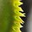 Thumbnail: Defused Venus Flytrap