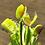 Thumbnail: Long Red Fingers Venus Flytrap