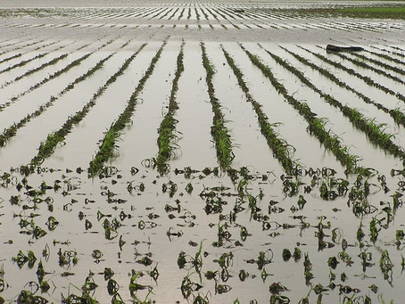 Adapt 2030 Warns of Weather/Food Supply Changes