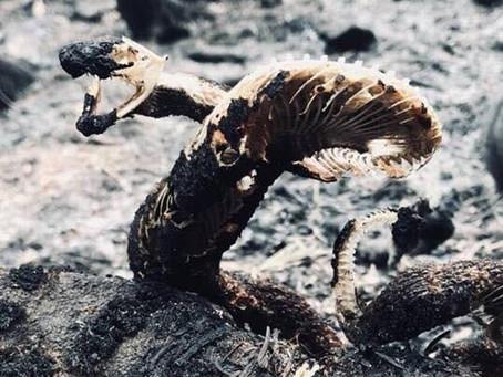 Nature Warrior Snake