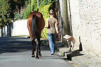 horse-4842520_1280.jpg