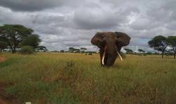 elephant in the rift