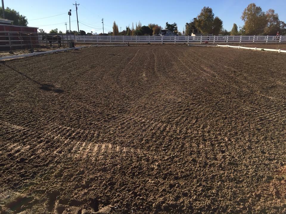 Horse Boarding Brentwood5.JPG