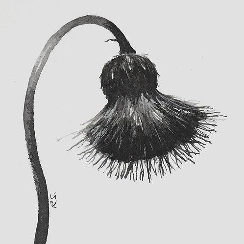 black & white No.1