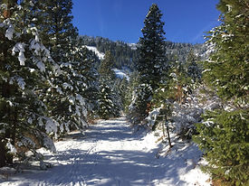 Snow on Upper Igo trail