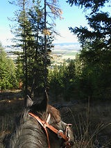 Photo of a horse at Upper Igo lookout point
