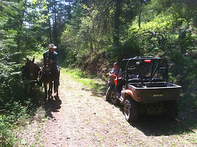 Mules and Jeep photo