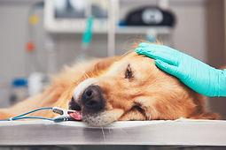 medicina-veterinaria.jpg