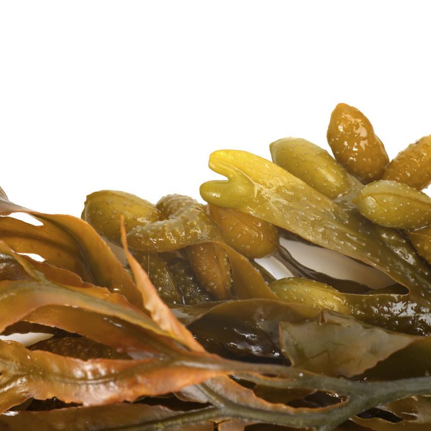Liquid seaweed fertiliser supplier
