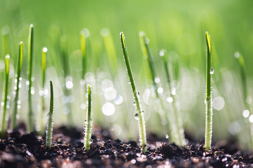 Spring fertilizer turf care fertiliser supplier