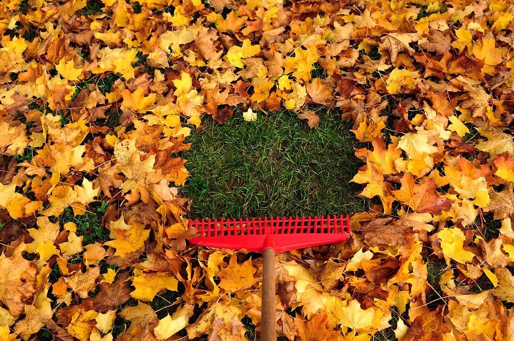 Winter turf care tips clear leaves from lawn