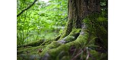 racines.png