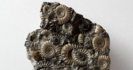 Ammonite13_001_edited.jpg