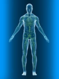 chemin de la lymphe dans le corps