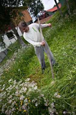 NordNorge 2012 0167_wm