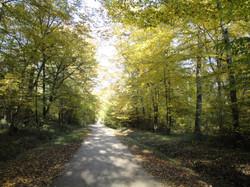 Sous Bois en forêt d'Orléans