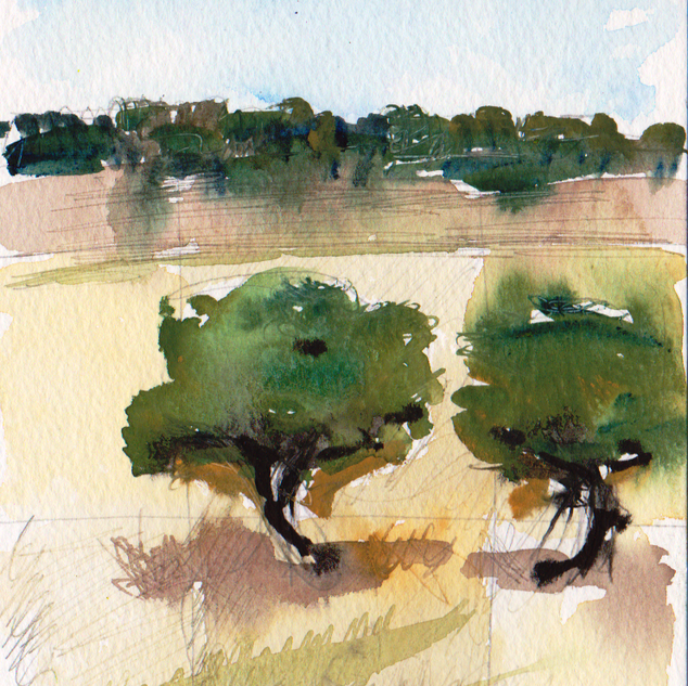 Olive trees Kryopigi