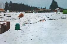 The green compost bin