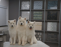 Cinder Grey, Kodiak, and Danby