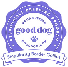 Singularity Border Collie Good Dog Badge