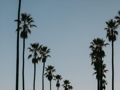 ロサンゼルスを一望できる丘の上から。