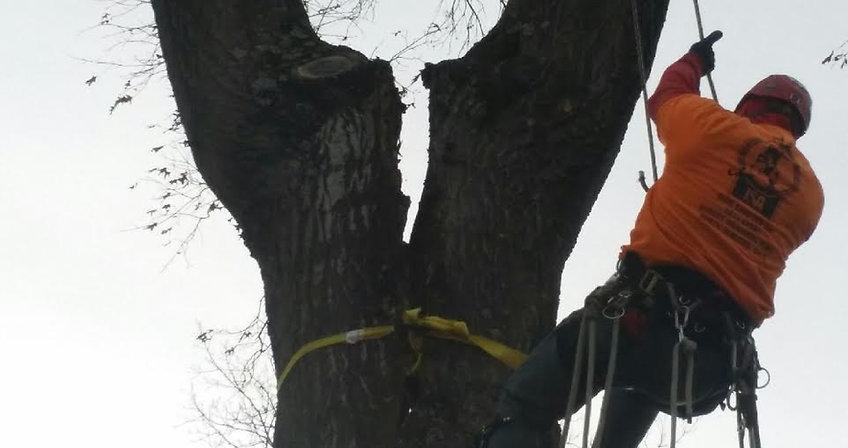 Tree Trimming Estimate Columbus OH Arborist