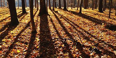 Tree company Columbus, OH