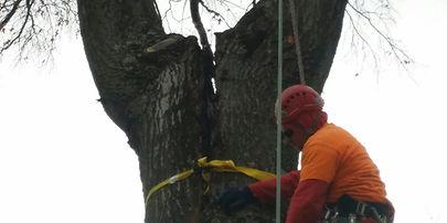 Tree Service Columbus OH
