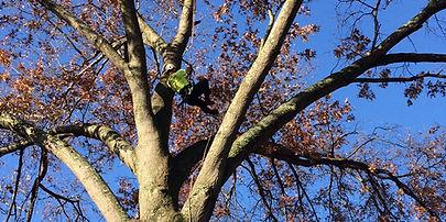Tree Pruning Columbus OH