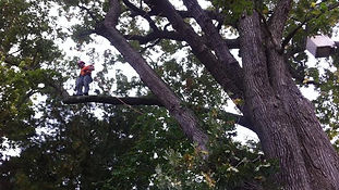 Tree Removal Columbus OH