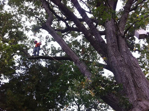 Tree Pruning Service Columbus OH