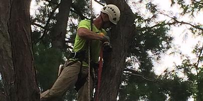 Tree assessment Columbus OH