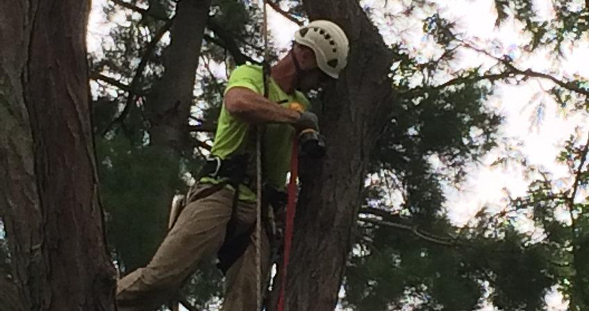 Tree Trimming Arborist Columbus OH