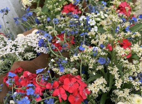 Happy 4th of July & American Flowers Week!