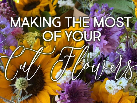 Making the Most of Your Cut Flowers