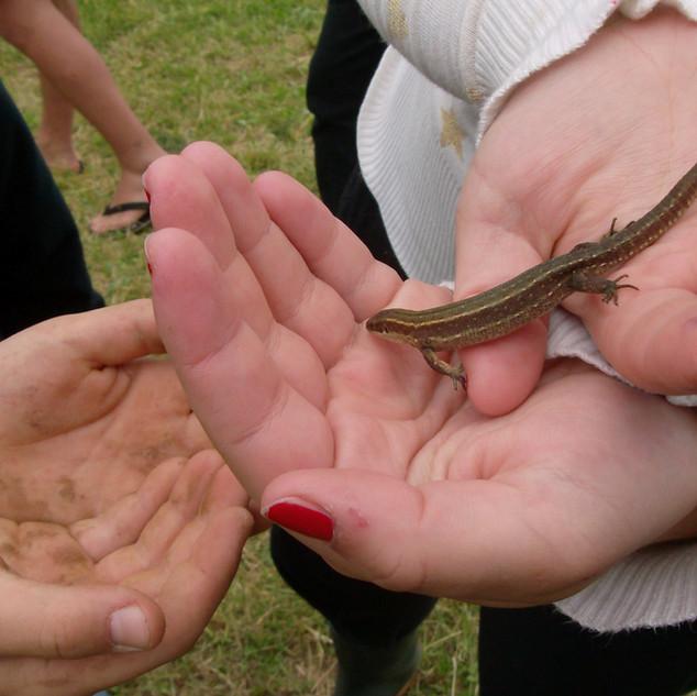 Zeltlager - Salamander