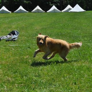 Zeltlager - Der Hund der Bäuerin