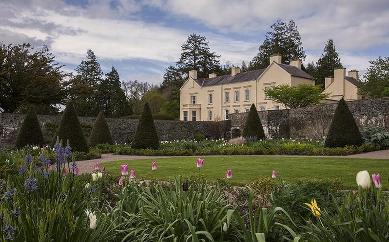 Tulips-upper-walled-garden-Aberglasney-1