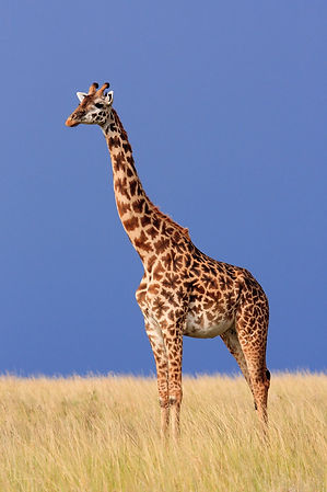 lengthening, head forward and up, good use, poise, balance, grace, posture